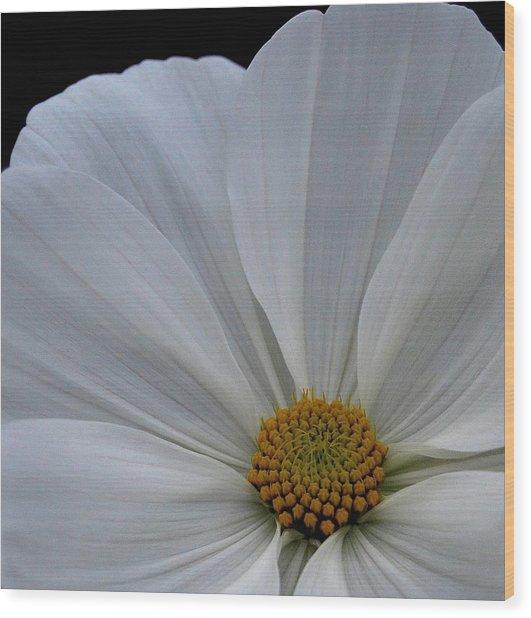 Softly White Wood Print by Marilynne Bull