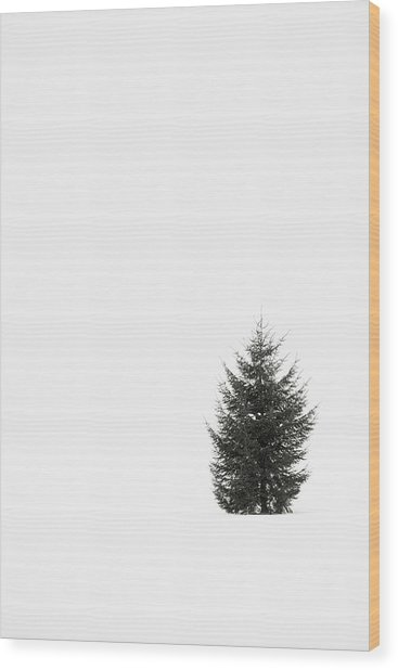 Solitary Evergreen Tree Wood Print by Jennifer Squires