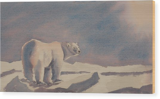 Solitary Polar Bear Wood Print by Debbie Homewood