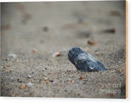 Solitary Shell Wood Print by Joseph Perno