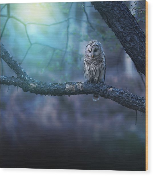Solitude - Square Wood Print
