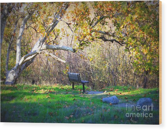 Solitude Under The Sycamore Wood Print