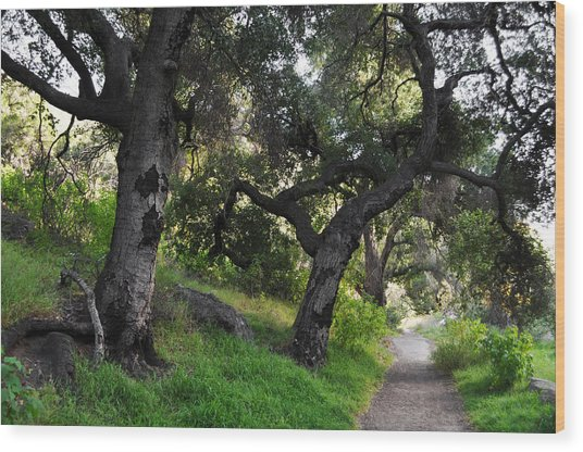 Solstice Canyon Live Oak Trail Wood Print