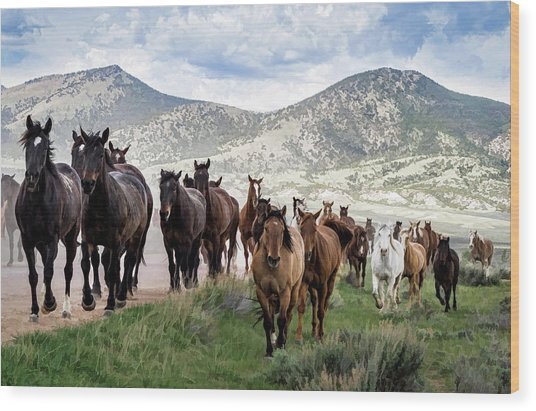 Sombrero Ranch Horse Drive, An Annual Event In Maybell, Colorado Wood Print