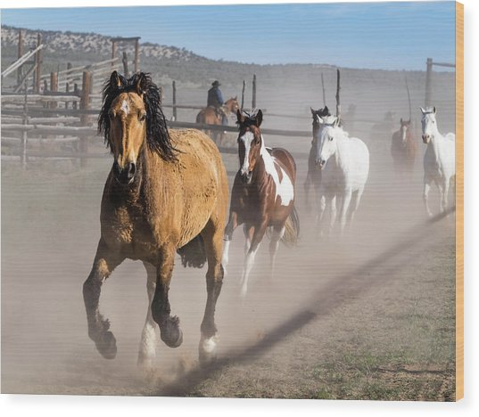 Sombrero Ranch Horse Drive At The Corrals Wood Print