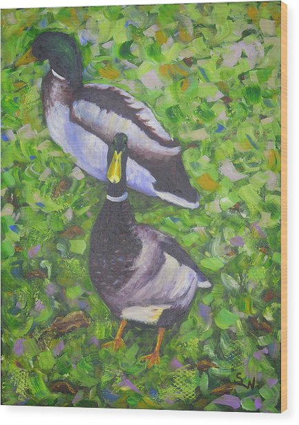 Somerset Ducks Wood Print