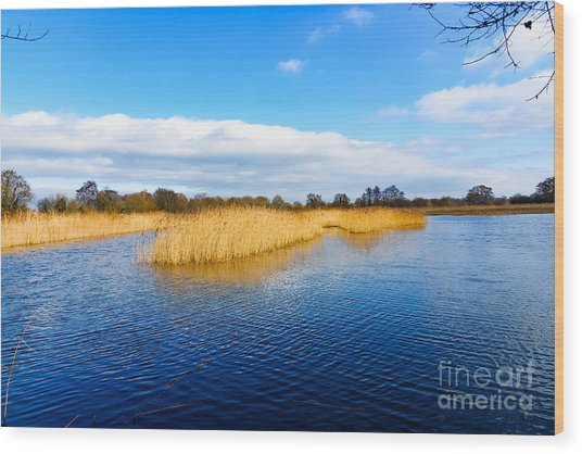 Somerset Levels Wood Print