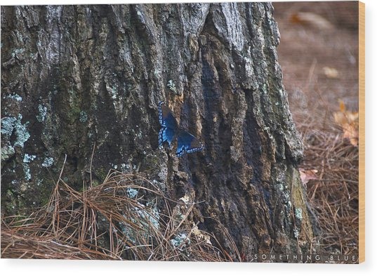 Something Blue Wood Print by Jonathan Ellis Keys