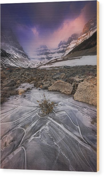Somewhere In The Canadian Rockies Wood Print