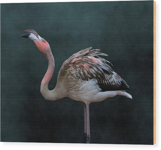 Song Of The Flamingo Wood Print