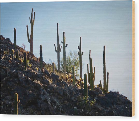 Sonoran Desert Saguaro Slope Wood Print