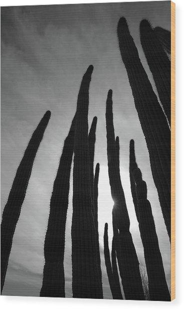 Sonoran Spires Wood Print by Robin Street-Morris