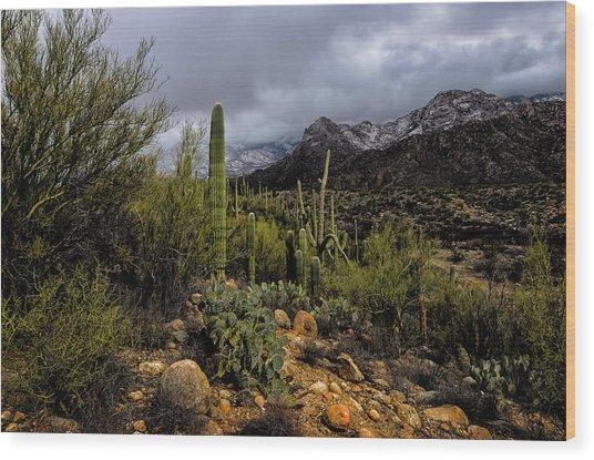 Sonoran Winter No.1 Wood Print