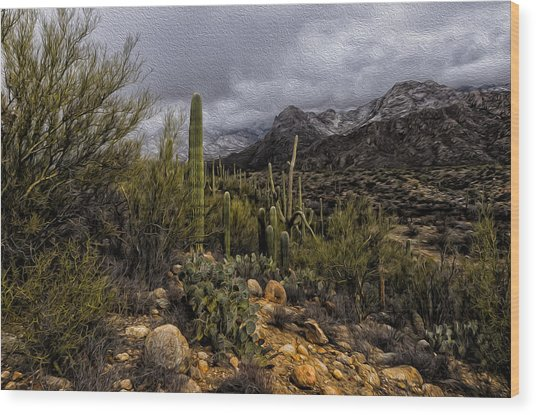 Sonoran Winter No.3 Wood Print