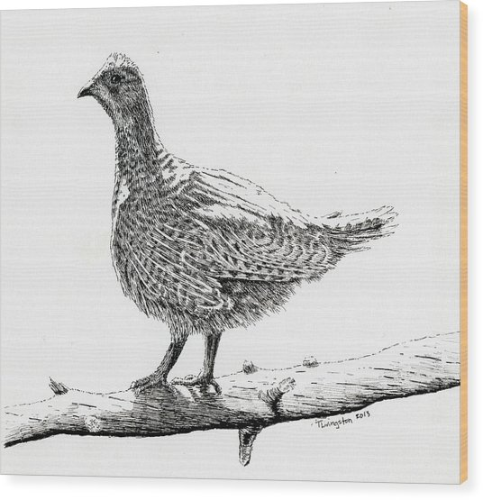 Sooty Grouse Wood Print
