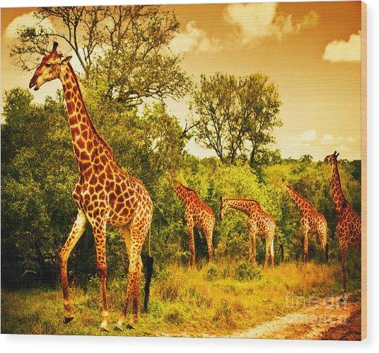 South African Giraffes Wood Print
