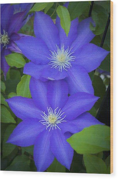 South Carolina Color Wood Print