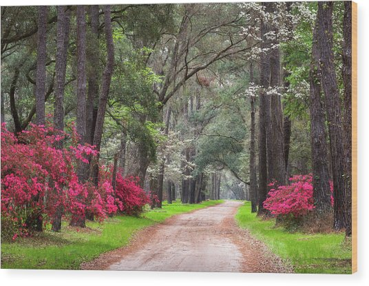 South Carolina Lowcountry Spring Flowers Dirt Road Edisto Island Sc Wood Print