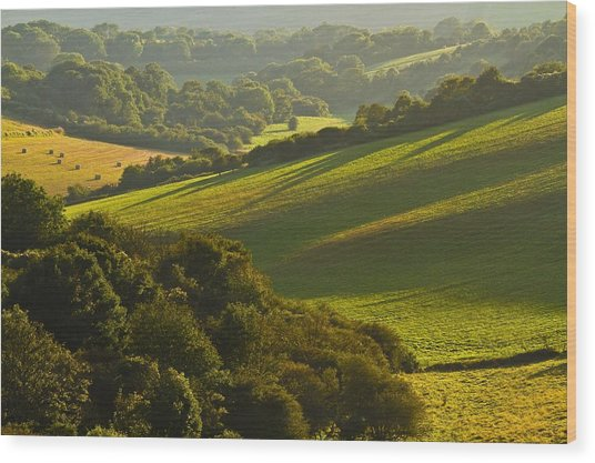 South Downs Wood Print