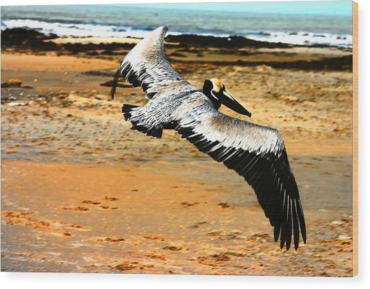 South Padre Pelican Wood Print by Laurie Prentice