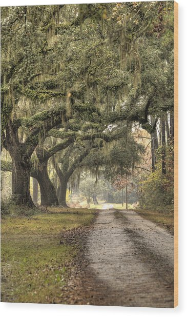 Southern Drive Live Oaks And Spanish Moss Wood Print