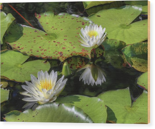 Southern Lilies  Wood Print by JC Findley