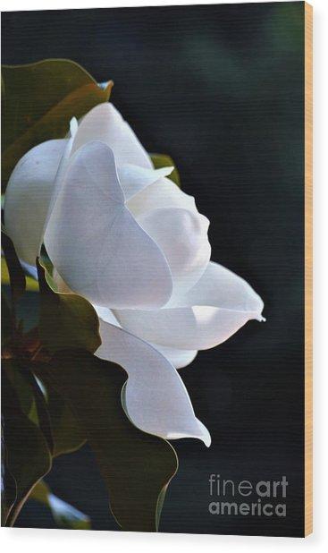Southern Magnolia Profile Wood Print