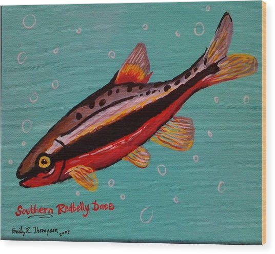 Southern Redbelly Dace Wood Print by Emily Reynolds Thompson