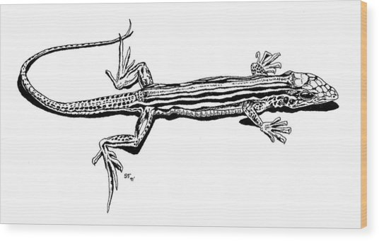 Southwest Lizard Wood Print by Stephen Taylor