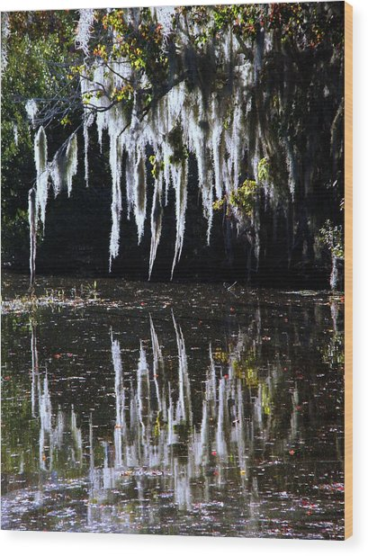 Spanish Moss Reflection Wood Print