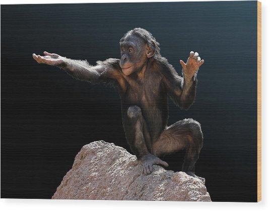 Spare Change? - Bonobo Wood Print