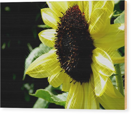 Sparkle Sunflower Wood Print