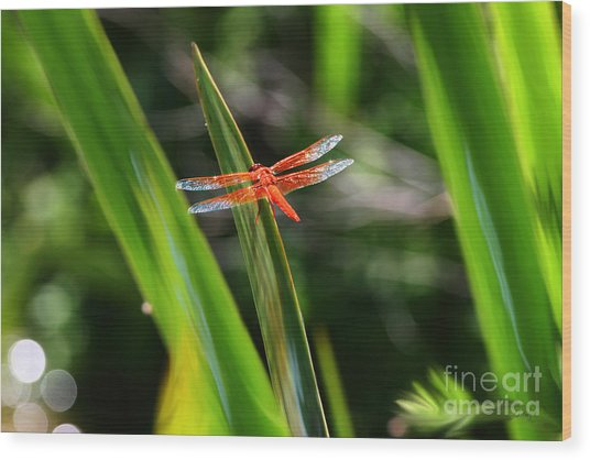 Sparkling Red Dragonfly Wood Print