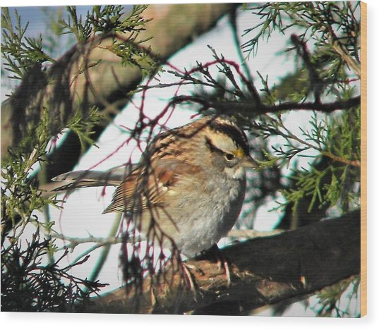 Sparrow In The Snow Wood Print