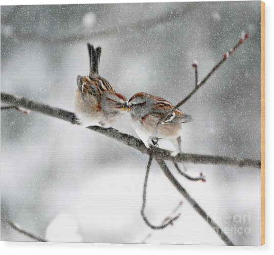 Sparrow Kiss Wood Print