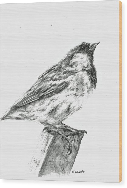 Sparrow Study Wood Print