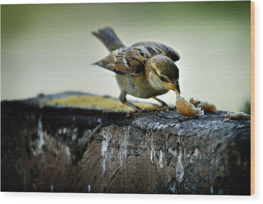 Sparrow Wood Print
