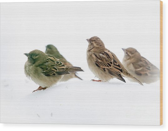 Sparrows In The Snow Wood Print