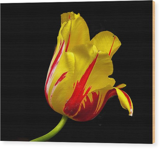 Special Flower For Someone Special Wood Print