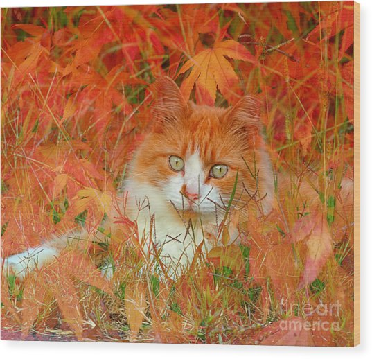 Special Kitty Wood Print
