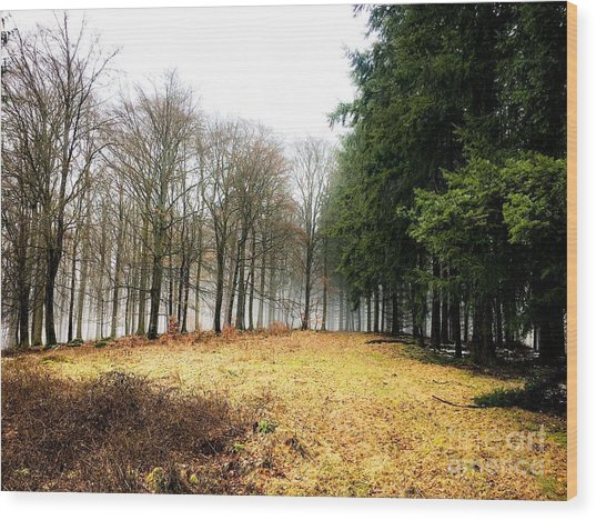 Spessart Landscape  Wood Print by Adelso Bausdorf