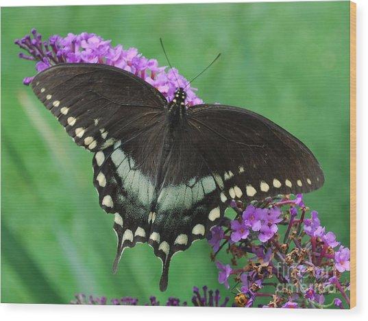 Spicebush Swallowtail Wood Print