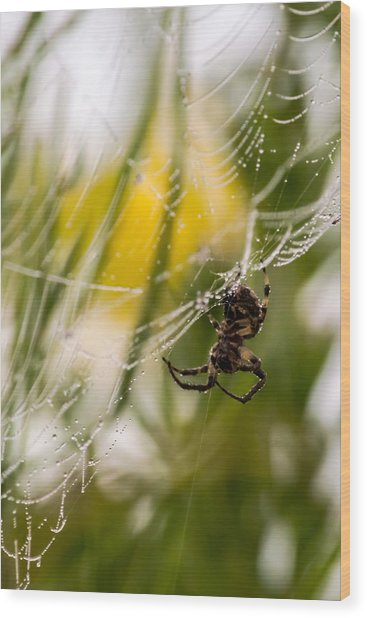 Spider And Spider Web With Dew Drops 04 Wood Print