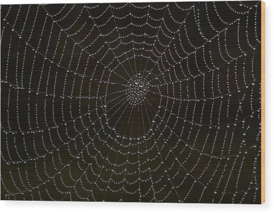Spider Cobweb  Wood Print