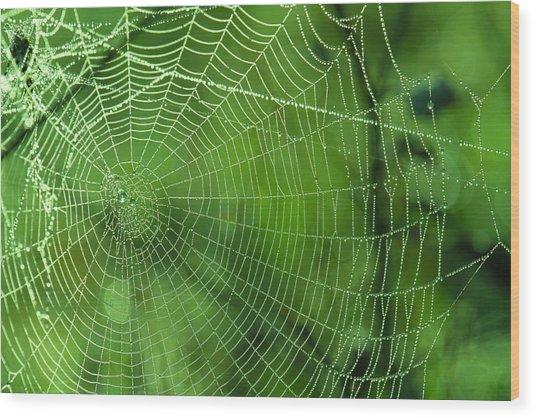 Spider Dew Wood Print