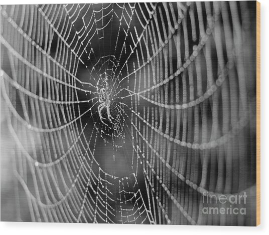 Spider In A Dew Covered Web - Black And White Wood Print