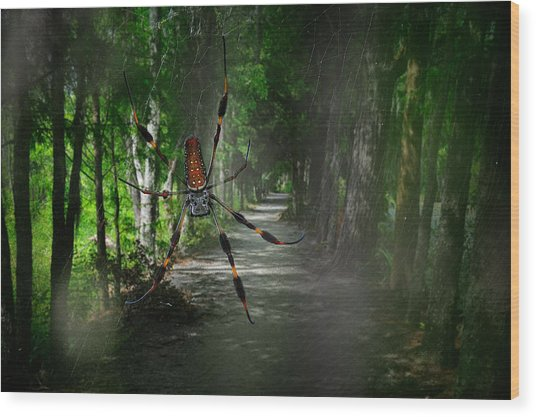 Wood Print featuring the photograph Spider Road by Harry Spitz