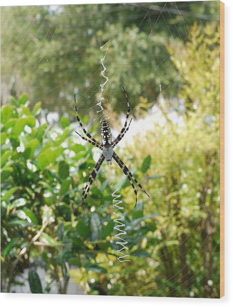 Spider Signals Wood Print by Bea Godwin