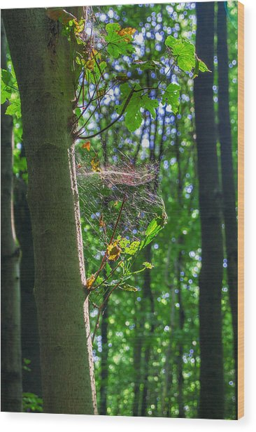Spider Web In A Forest Wood Print