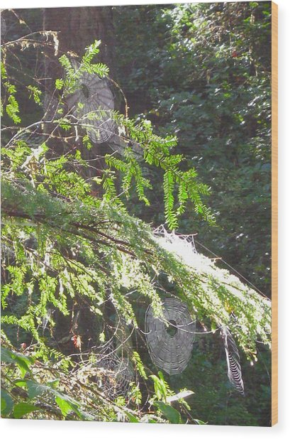 Spider Webs  -- Olympic National Park Wood Print